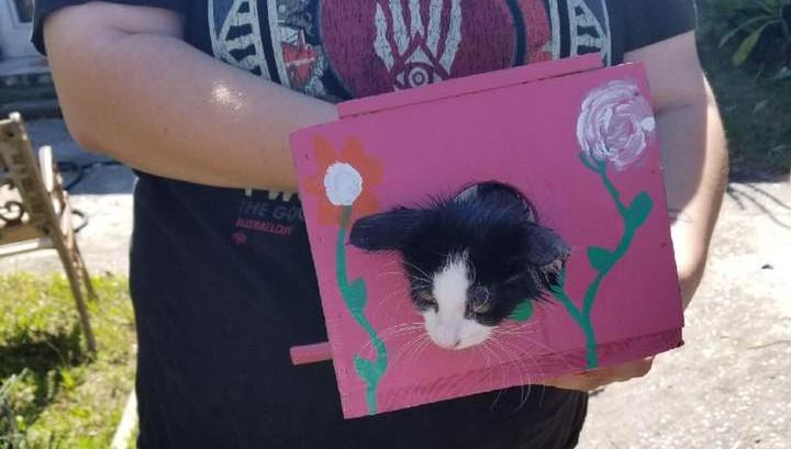 Kitten Rescue: Head Caught in Birdhouse  Kitten Rescue: Head Caught in Birdhouse 44992002 1580907395387769 6988229459258114048 nb