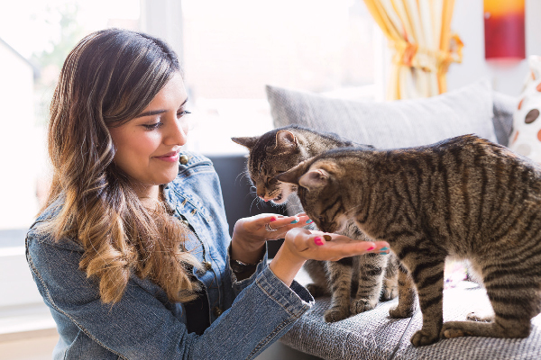 The way to Assist Your Obese Cat  The way to Assist Your Obese Cat A woman feeding her cat