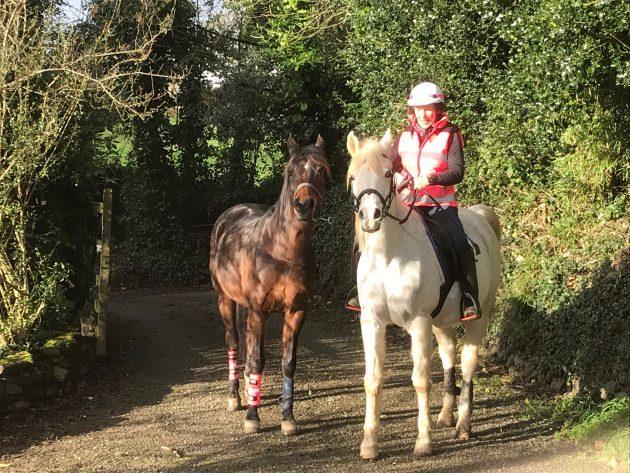 Annie Joppe's endurance weblog: again to actuality  Annie Joppe's endurance weblog: again to actuality Dilmun and Chiara ready for work e1548755528491