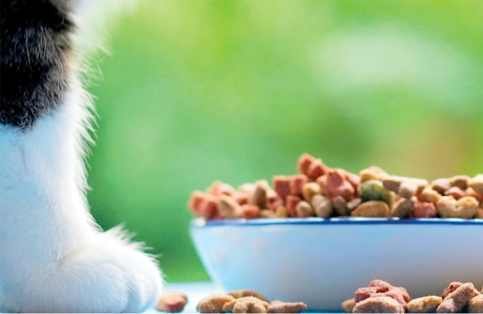 Enhancing pets' well-being through the brain-gut axis  Enhancing pets' well-being through the brain-gut axis Pet food with pet
