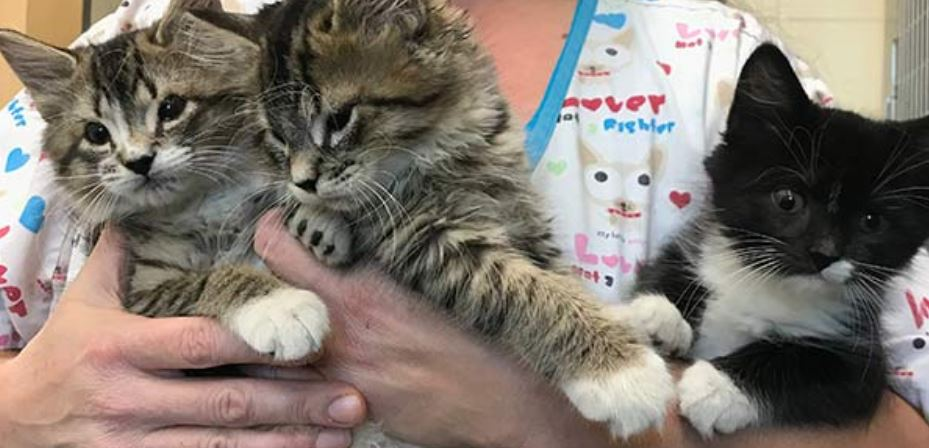 Kittens Without Eyelids to Receive Sight-Saving Surgery  Kittens Without Eyelids to Receive Sight-Saving Surgery boston 5