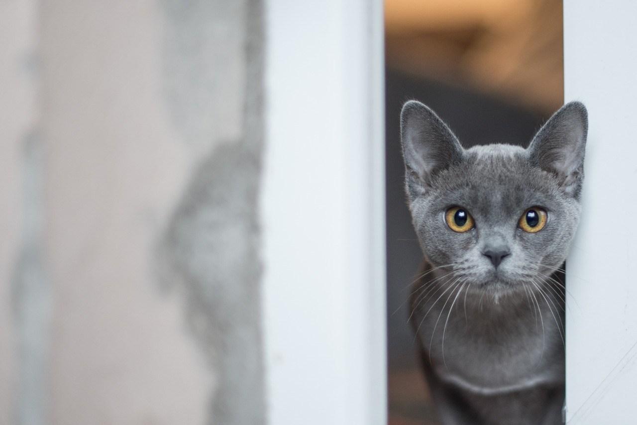 2019 Pet Care Developments That Each Pet Proprietor Ought to Know  2019 Pet Care Developments That Each Pet Proprietor Ought to Know 2 12