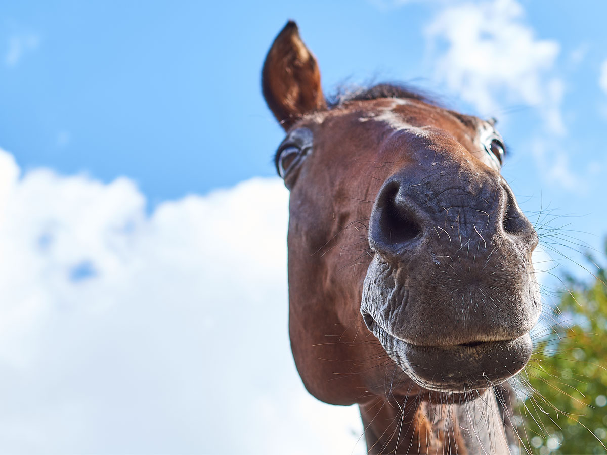 Horse homeowners suggested to be vigilant following latest equine influenza outbreaks  Horse homeowners suggested to be vigilant following latest equine influenza outbreaks WEB FluOutbreak
