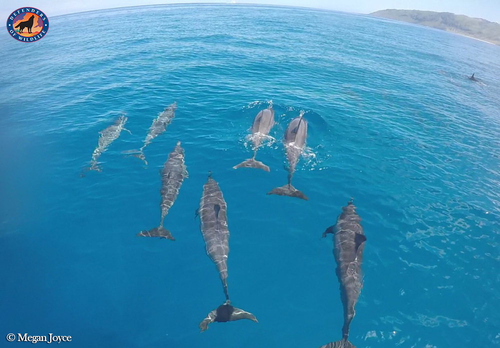 Our Blue Planet  Our Blue Planet dolphins hawaii