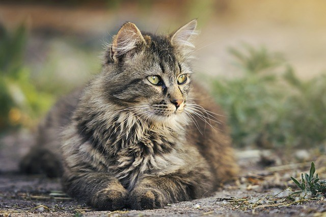 Surprising Facts About Cats  Surprising Facts About Cats 2 17