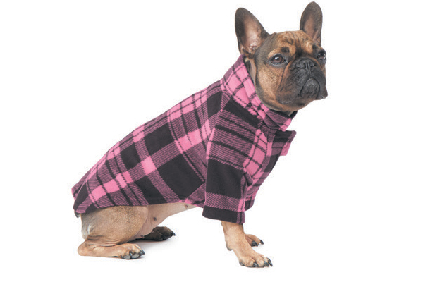 10 Products to Put Spring in Your Dog's Step  10 Products to Put Spring in Your Dog's Step 32 Degrees Coat 2