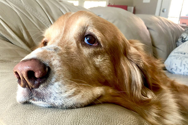 Colitis in Canine — Know the Causes, Signs and Therapies  Colitis in Canine — Know the Causes, Signs and Therapies A sick senior dog
