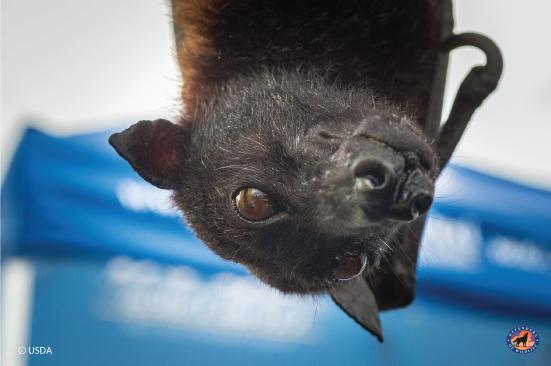 Bringing Bats Out of the Shadows  Bringing Bats Out of the Shadows BatsFI