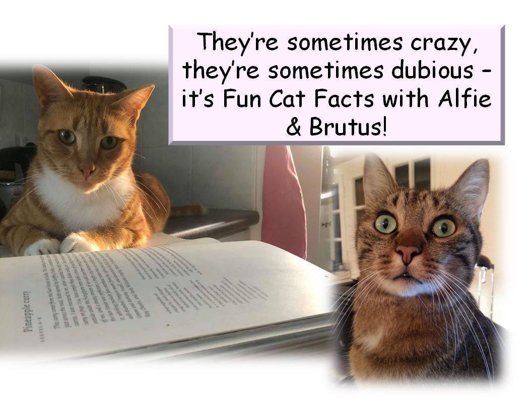 Enjoyable Information with Alfie & Brutus: We disagree with Diets!  Enjoyable Information with Alfie & Brutus: We disagree with Diets! Marc FF