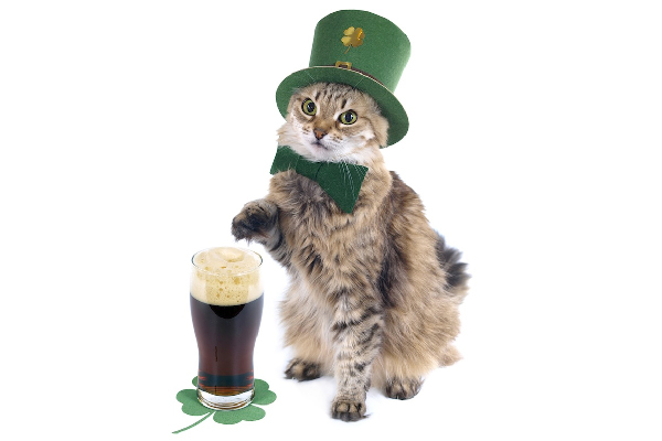 Can Cats Eat Corned Beef and Cabbage?  Can Cats Eat Corned Beef and Cabbage? St Patricks Day cat