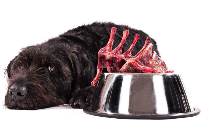 Canines probably advanced to eat cooked meat and carbohydrates  Canines probably advanced to eat cooked meat and carbohydrates black dog raw meat bowl