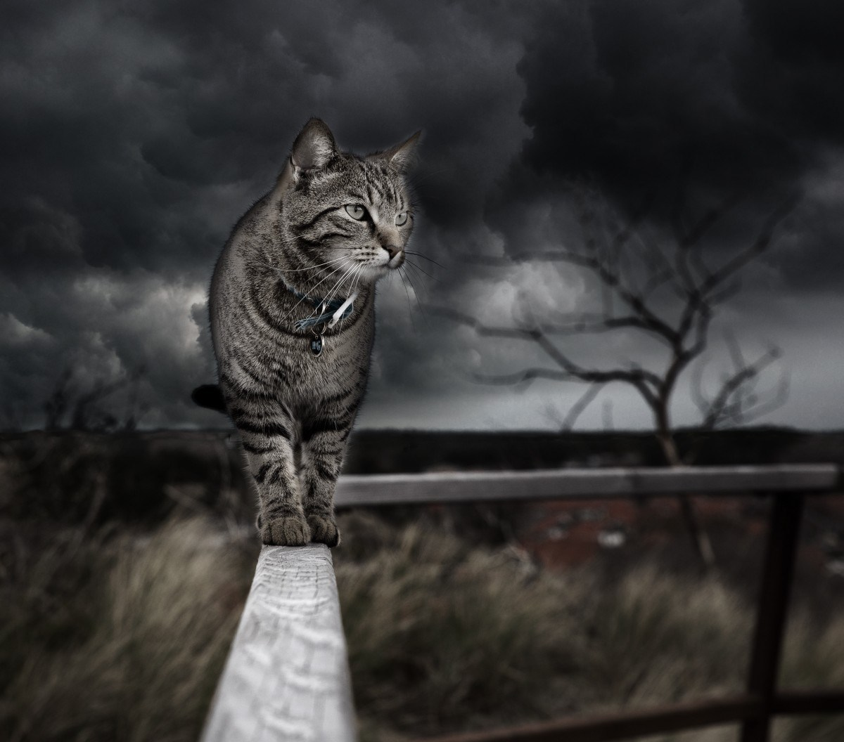 Purrsday Poetry: A Scrap of Catteral for Freya  Purrsday Poetry: A Scrap of Catteral for Freya cat in a storm