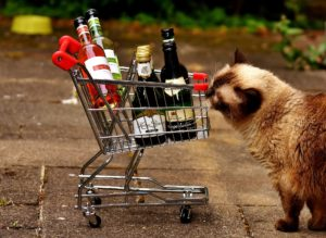 Volunteers Needed: Should Need To Drink Wine And Feed Shelter Cats  Volunteers Needed: Should Need To Drink Wine And Feed Shelter Cats cat wine2 300x219