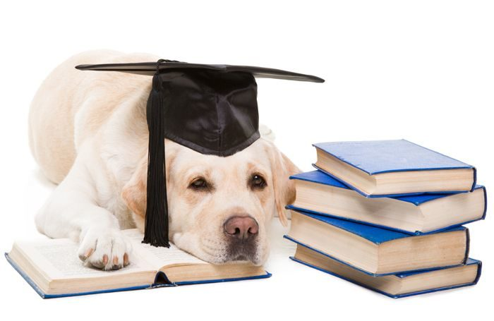 Educated, discerning pet meals consumers might pay extra  Educated, discerning pet meals consumers might pay extra dog books research