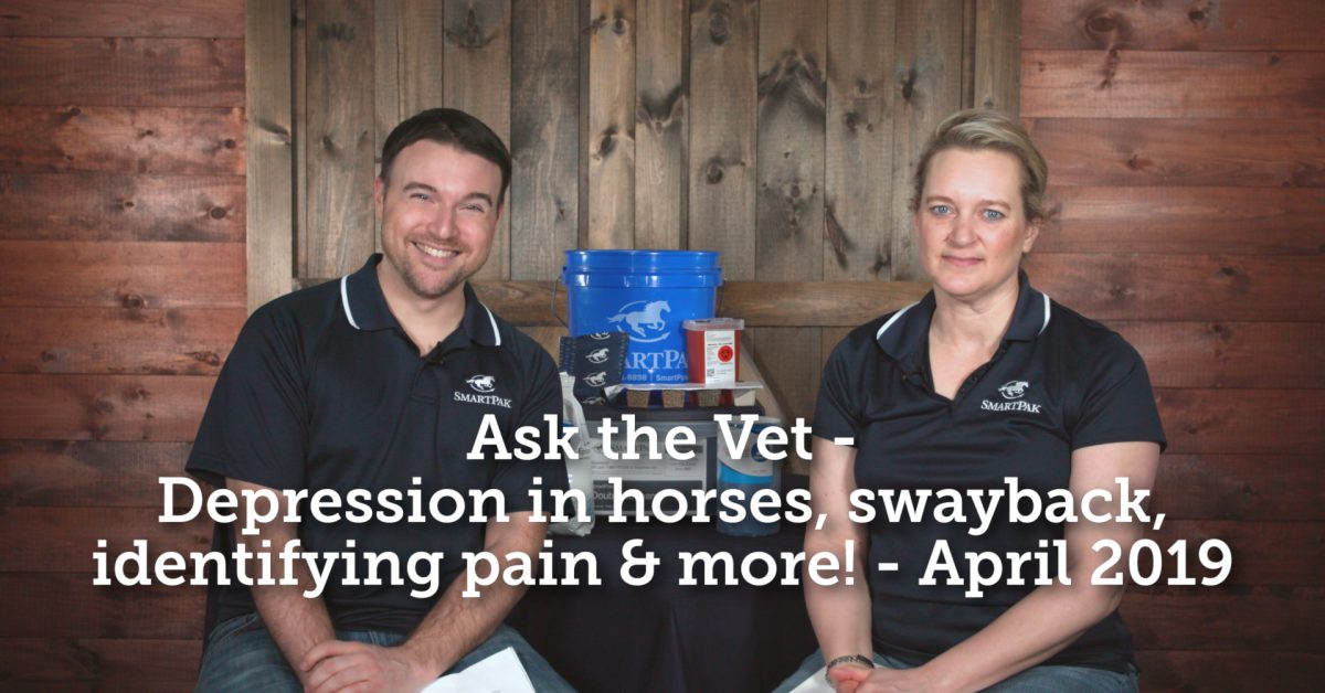 Ask the Vet – Depression in horses, swayback, identifying pain & more! – April 2019  Ask the Vet – Depression in horses, swayback, identifying pain & more! – April 2019 Ask the Vet Depression in horses swayback identifying pain and more April 2019 thumb 1200x628