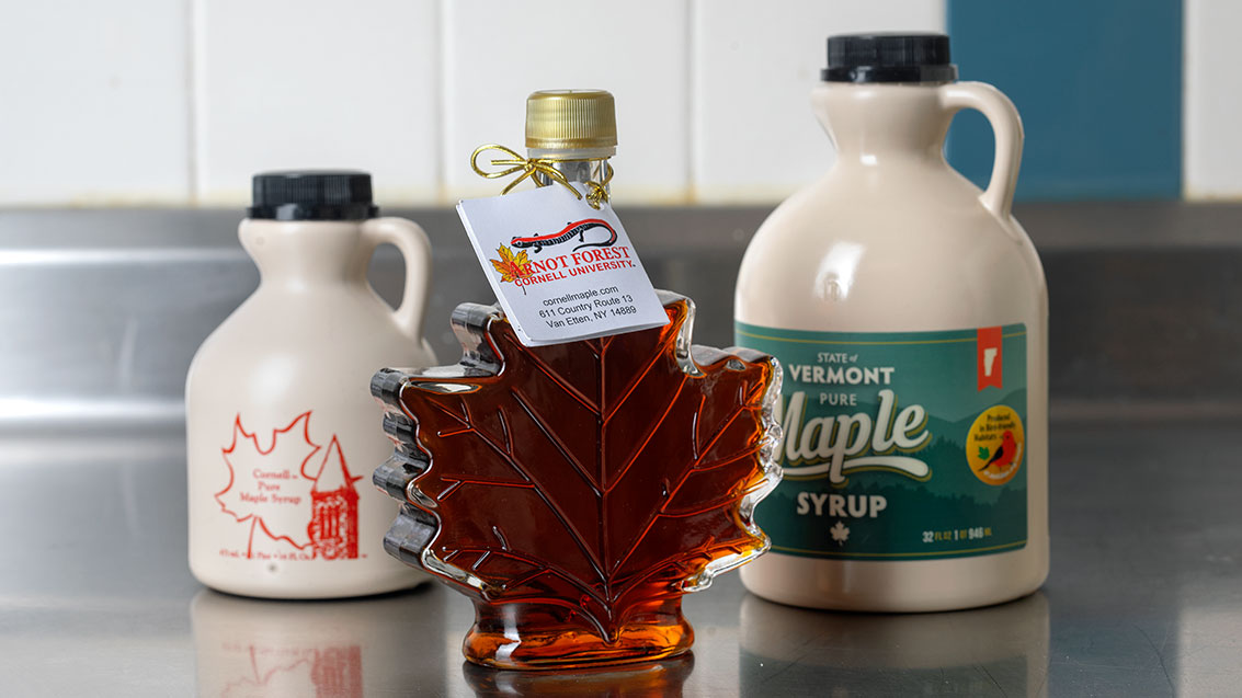 Turning Maple Syrup Forests Into Bird-Friendly Habitat  Turning Maple Syrup Forests Into Bird-Friendly Habitat MapleSyrup FI2