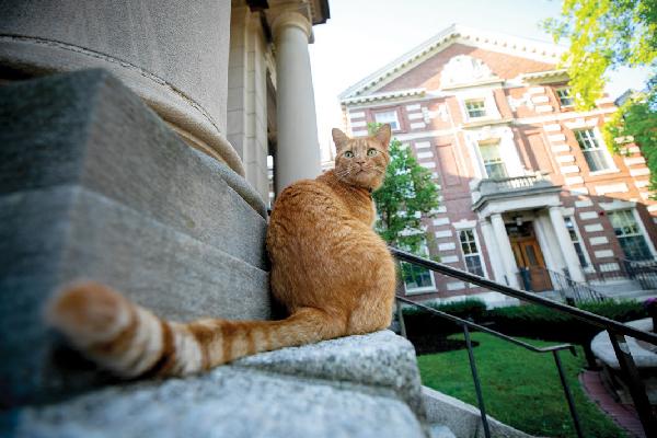 Remy the Humanities Cat  Remy the Humanities Cat Remy the Humanities Cat 2