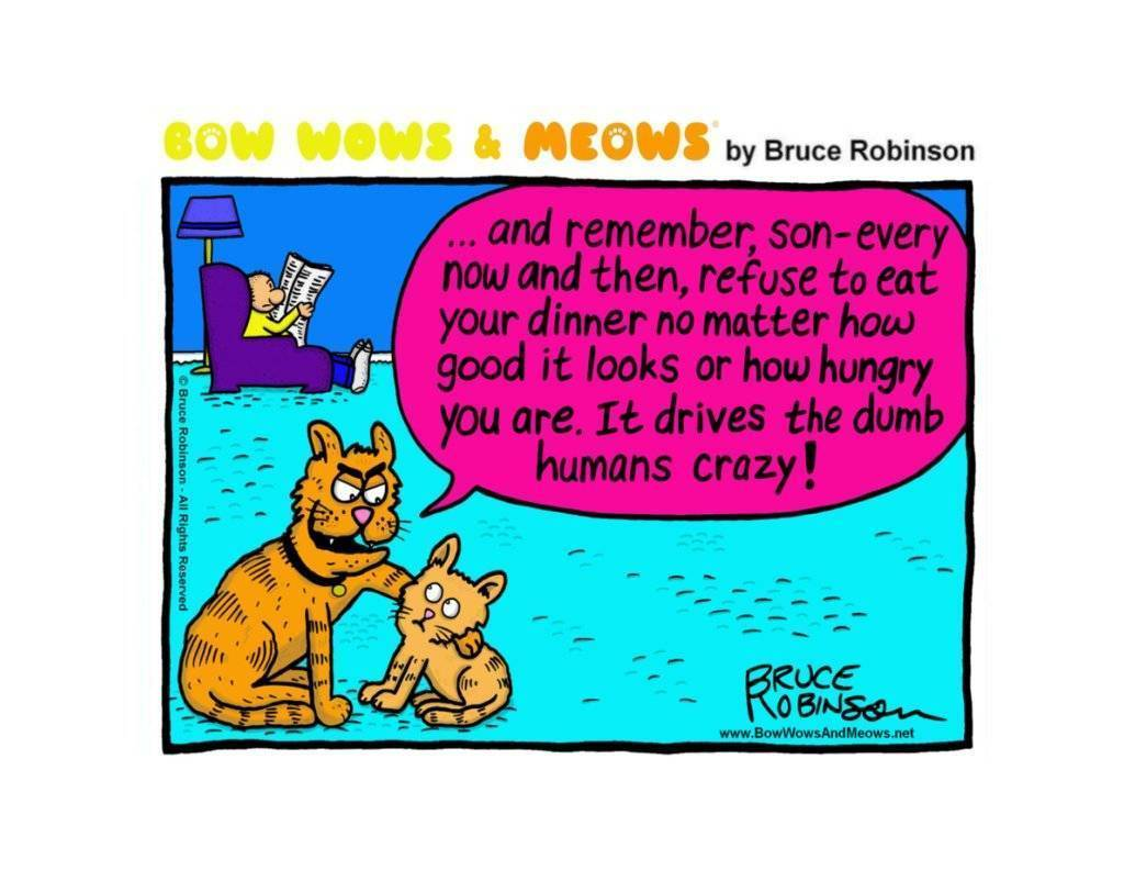 Bow Wows & Meows by Bruce Robinson: Fussy Cats  Bow Wows & Meows by Bruce Robinson: Fussy Cats bow vows and meows 3