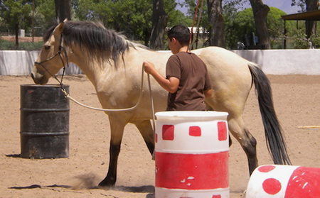 Youth, Addiction, Horses and Healing  Youth, Addiction, Horses and Healing timblog 2 copy 1