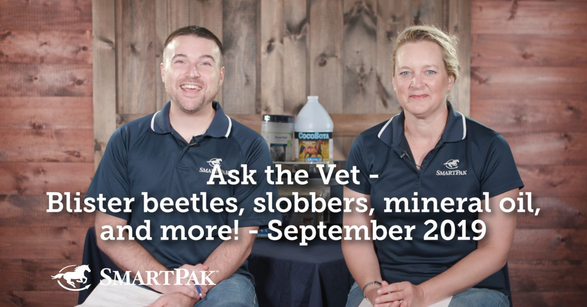 Ask the Vet – Blister beetles, clover slobbers, mineral oil, and extra! – September 2019  Ask the Vet – Blister beetles, clover slobbers, mineral oil, and extra! – September 2019 Ask the Vet Blister beetles slobbers mineral oil and more September 2019 thumb 1200x628