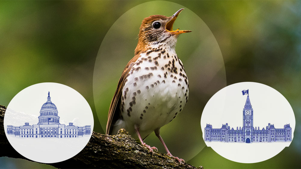 How to Fix the Bird Declines: A To-Do List for Government, Business, and Individuals  How to Fix the Bird Declines: A To-Do List for Government, Business, and Individuals WoodThrush capitols FI