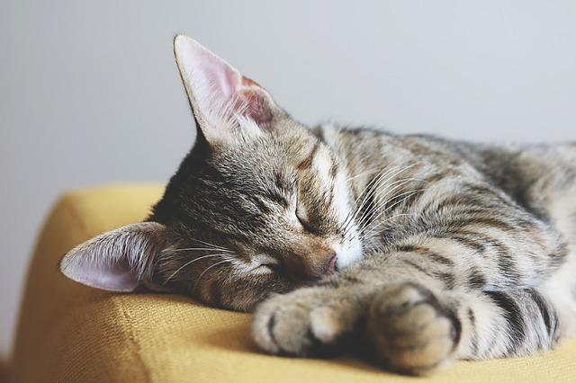Cat Behavior: Early Morning Wake-Up Call  Cat Behavior: Early Morning Wake-Up Call cat 3695694 640