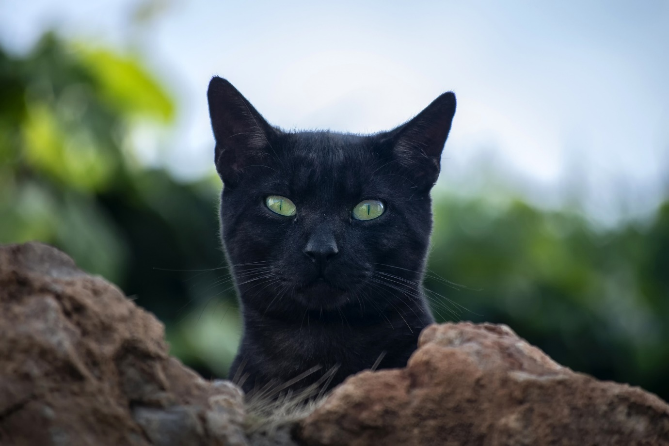 Why Are Black Cats Thought of to Be Dangerous Luck?  Why Are Black Cats Thought of to Be Dangerous Luck? 2 3