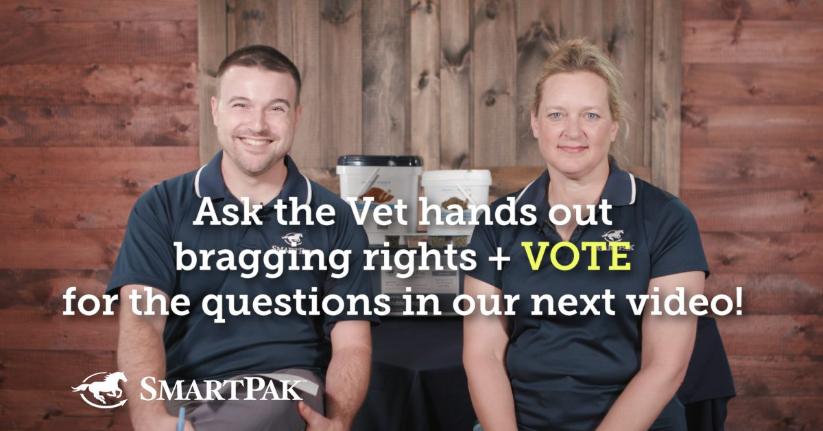 Ask the Vet fingers out bragging rights + VOTE for the questions in our subsequent video!  Ask the Vet fingers out bragging rights + VOTE for the questions in our subsequent video! Ask the Vet hands out bragging rights VOTE for the questions in our next video thumb 1200x628