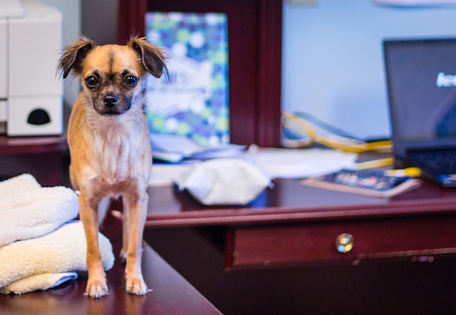 The Do's and Don't's of Retaining a Canine as an Workplace Pet  The Do's and Don't's of Retaining a Canine as an Workplace Pet 2 16