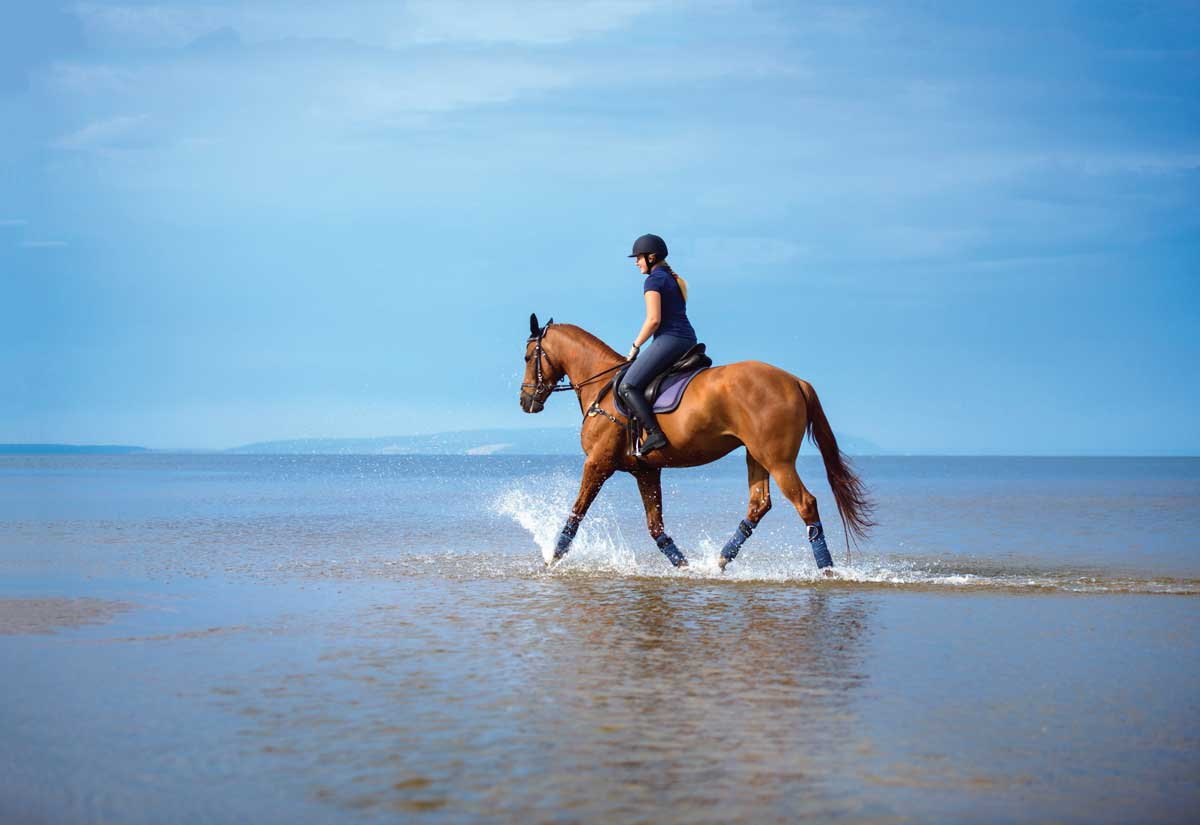 50 horsey issues it is best to do not less than as soon as  50 horsey issues it is best to do not less than as soon as horse riding in sea