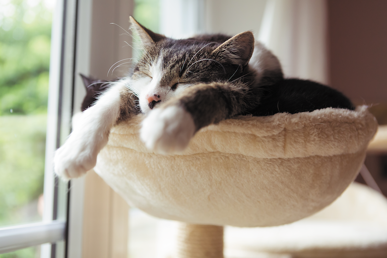 Why Do Cats Sleep So A lot?  Why Do Cats Sleep So A lot? 2003 WhyDoCats GettyImages 1010539662