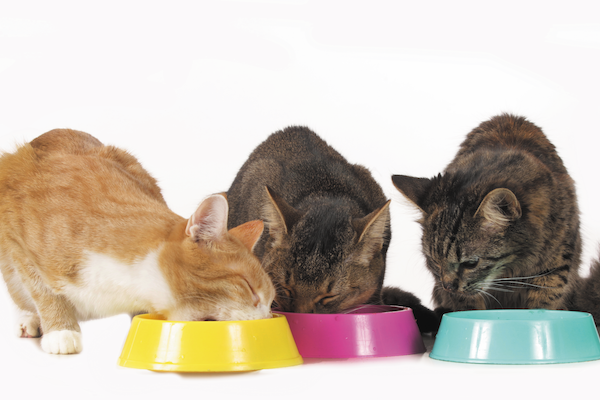 Meals for Pets in Want  Meals for Pets in Want Three bowls Getty477732976