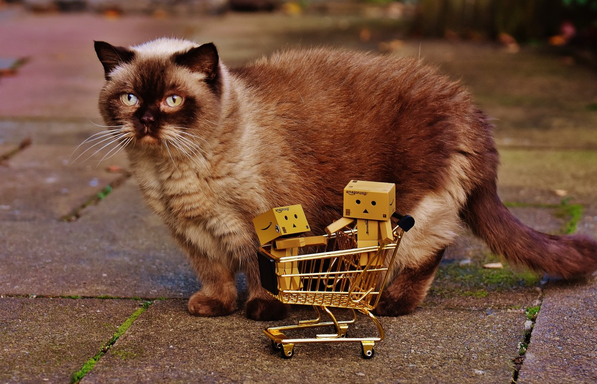 Feline Beneficiant? Consumers Requested to Increase Money For Kitties  Feline Beneficiant? Consumers Requested to Increase Money For Kitties danbo figures shopping cart shopping cat curious british shorthair together 1169569