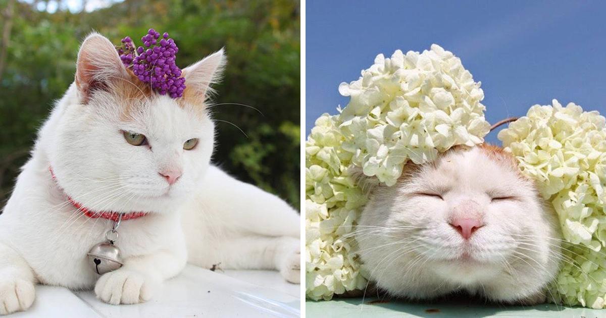 Shiro, The Web's Favourite Zen Cat, Has Handed Away  Shiro, The Web's Favourite Zen Cat, Has Handed Away shirofeature