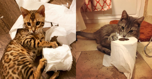 Cats Don't Care About Our Bathroom Paper Worries  Cats Don't Care About Our Bathroom Paper Worries toilet paper cats