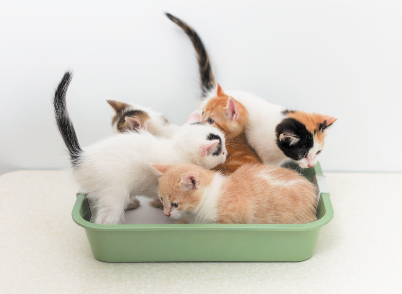 10 Bizarre Cat Litter Field Habits  10 Bizarre Cat Litter Field Habits 2005 NewCattitude GettyImages 505016408 800x586
