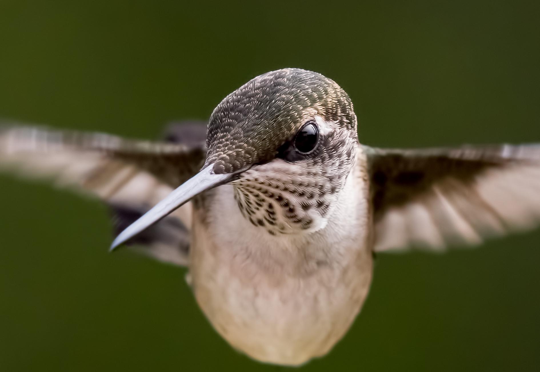 Potpourri: BirdSpotter Judges' Selection Winner  Potpourri: BirdSpotter Judges' Selection Winner Category8 JC RTHU DianneRoland