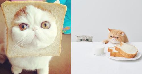Cat-Formed Bread & Bread-Formed Cats  Cat-Formed Bread & Bread-Formed Cats cat bread