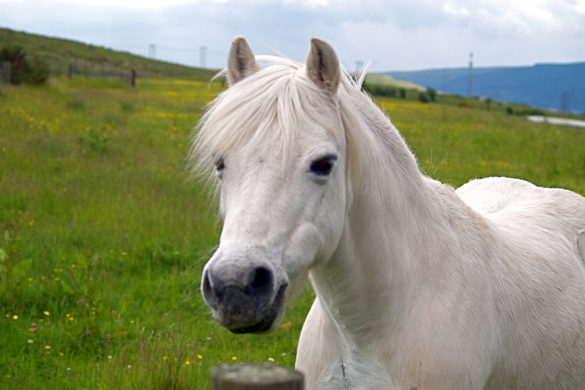 Snowball the Pony's 5 Favourite Issues Concerning the Apocalypse  Snowball the Pony's 5 Favourite Issues Concerning the Apocalypse dreamstime m 96772418