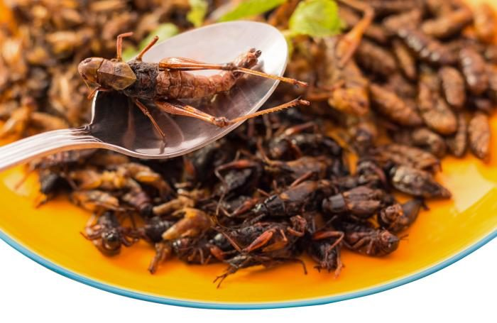 Cricket-based pet food helps wholesome canine intestine microbes  Cricket-based pet food helps wholesome canine intestine microbes fried insects on spoon