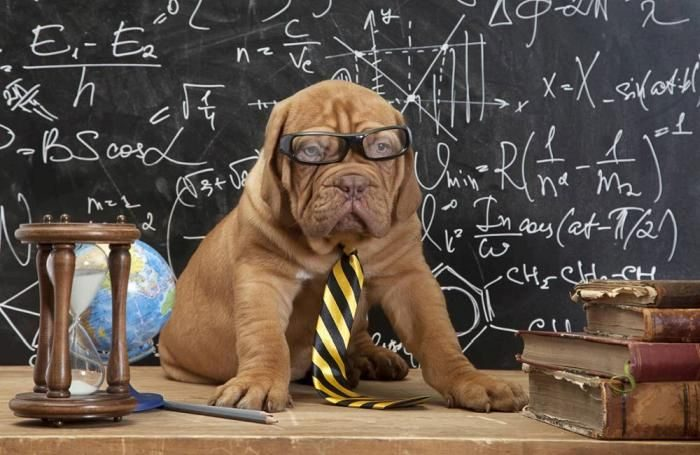 Confusion over pet vitamin requires shopper training  Confusion over pet vitamin requires shopper training puppy with glasses at chalkboard