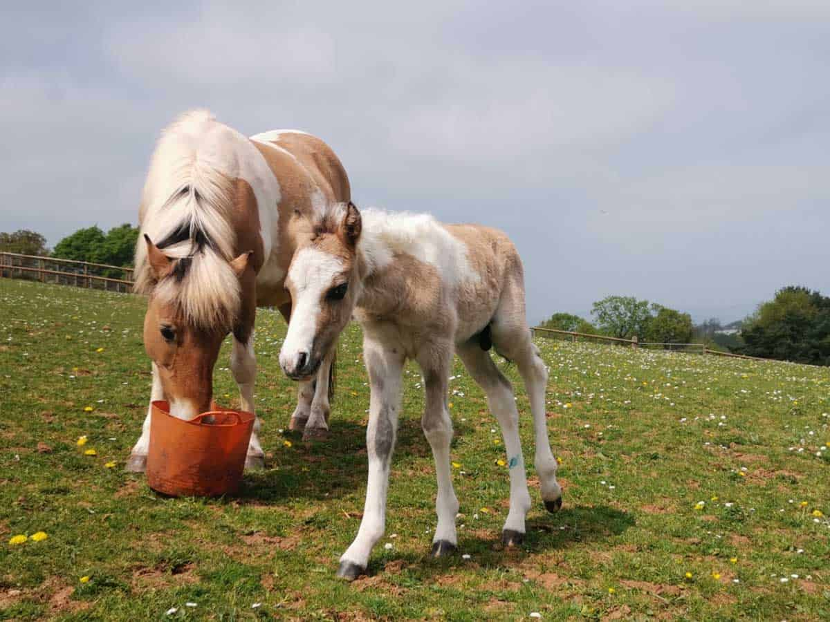 The Mare and Foal Sanctuary rejoice the delivery of their first foal in 2020  The Mare and Foal Sanctuary rejoice the delivery of their first foal in 2020 WEB Lotte and her foal Lio