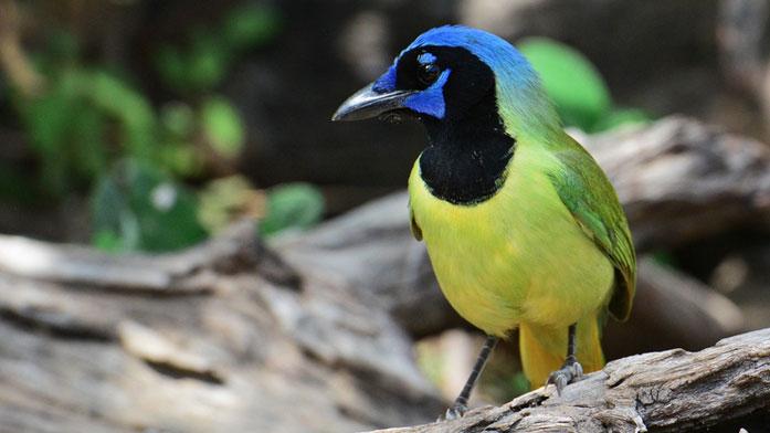 Birding Festivals and Occasions  Birding Festivals and Occasions grja rgvbf