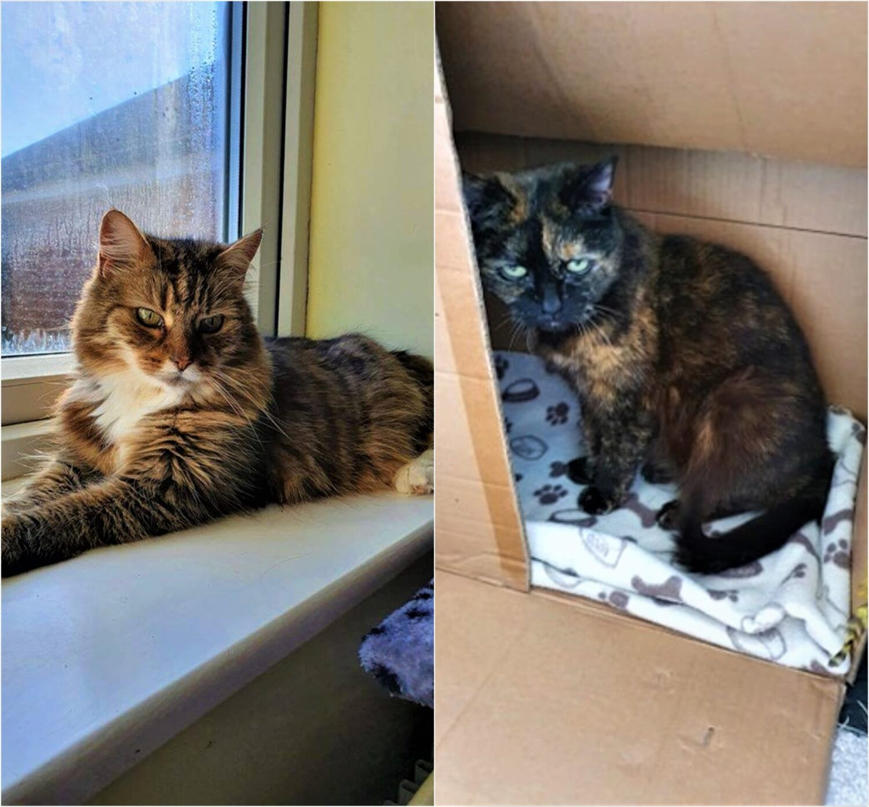 Higher Life for the Senior Cat Sisters  Higher Life for the Senior Cat Sisters phodsvS 1500x1392