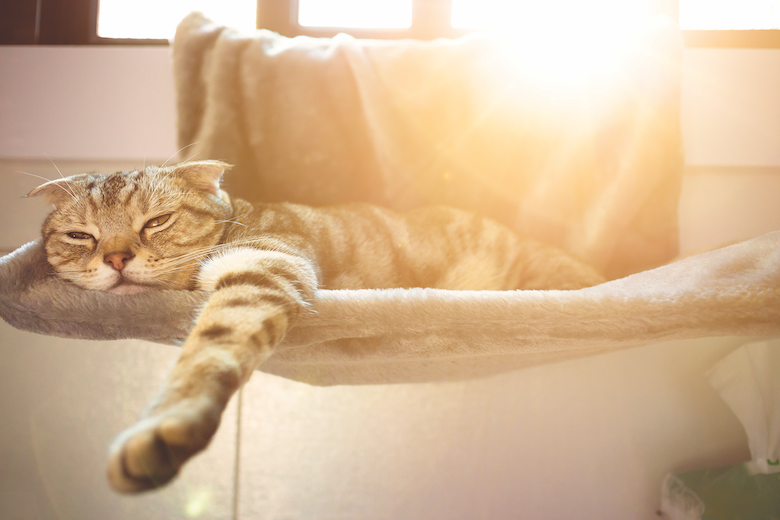 9 Methods Cats Can Soak Up Summer time Trip  9 Methods Cats Can Soak Up Summer time Trip 2007 MeowOutLoud CatSun GettyImages 821467204