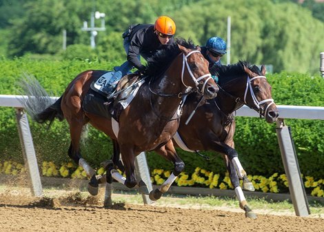 Pletcher Duo Dr Publish, Farmington Street Work for Belmont  Pletcher Duo Dr Publish, Farmington Street Work for Belmont 424073ce0e58498a9fea2ba9f6858567