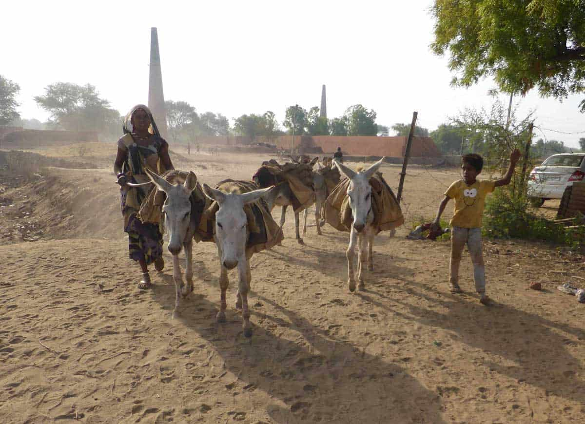 New analysis considers the implications of equine prescription in northern India  New analysis considers the implications of equine prescription in northern India WEB Credit TW2020 The Donkey Sanctuary