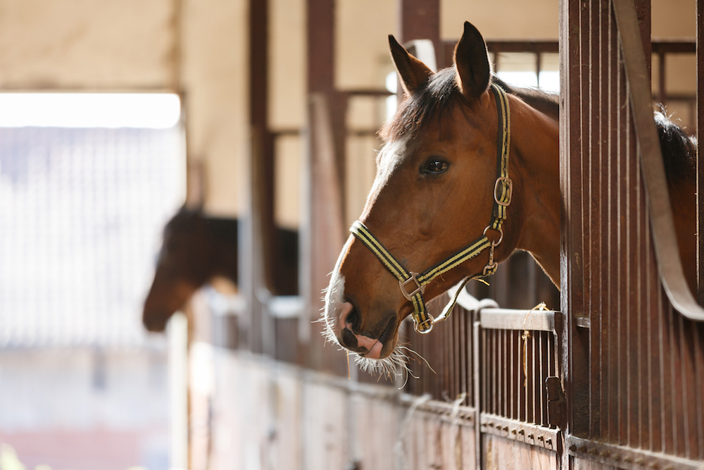 My Horse Broken Property on the Boarding Barn—Am I Liable for Paying for It?  My Horse Broken Property on the Boarding Barn—Am I Liable for Paying for It? dreamstime m 71500911