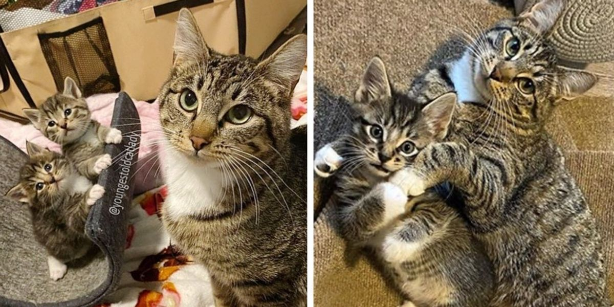 Stray Cat Wanders into Household's Residence to Have Kittens and It Turns Her Life Round  Stray Cat Wanders into Household's Residence to Have Kittens and It Turns Her Life Round img