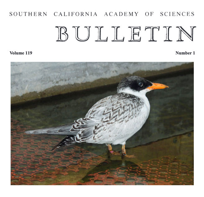 New Scientific Paper Printed: Caspian Terns Saved, Rehabilitated, and Launched by Worldwide Chicken Rescue Are Surviving and Breeding!  New Scientific Paper Printed: Caspian Terns Saved, Rehabilitated, and Launched by Worldwide Chicken Rescue Are Surviving and Breeding! Caspian Tern Paper cover